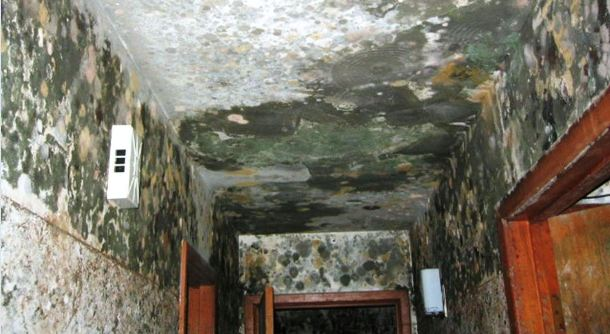 Mold Damage Insurance Claims